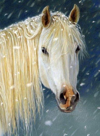 White horse Sue Warner copy